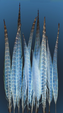 infrared pheasant feathers