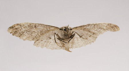 dire: dried, dead butterfly, macro shot