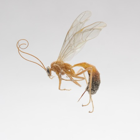 dire: dried dead wasp, macro shot Stock Photo