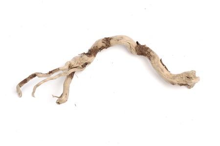 twig: dry twig without bark isolated