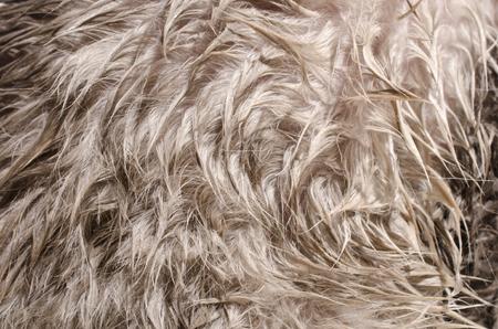 Wet cat hair texture, macro Stock Photo