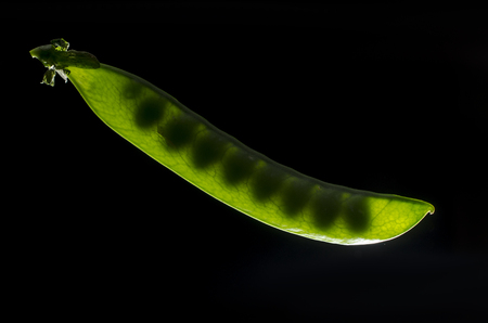 Peas in pods backlight Stock Photo