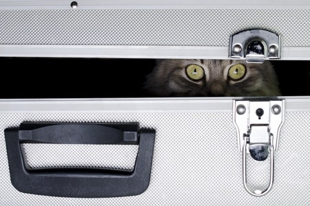 the cat is sitting in an iron suitcase