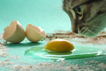 Cat making Mischief in the Kitchen