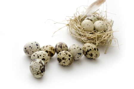 quail eggs with feather in a nest isolated on white background