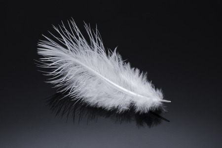 white fluffy feather isolated on black Фото со стока