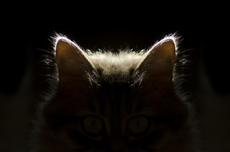 cat ears,cat in the dark 스톡 콘텐츠