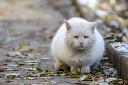 traurige obdachlose Katze auf der Straße