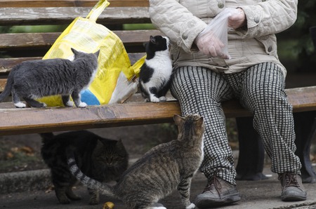 old woman feeds homeless cats 写真素材