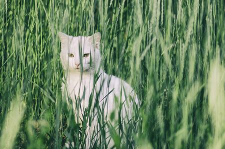 white cat in the green grass Standard-Bild