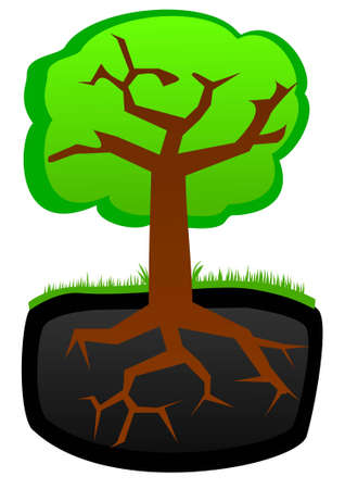 Tree. Roots and krone Vector