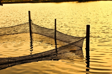 Netting fish. photo