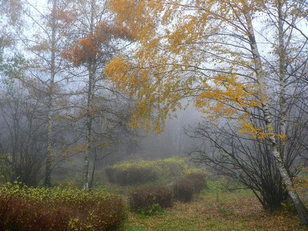 dampness: fog in autumn Stock Photo