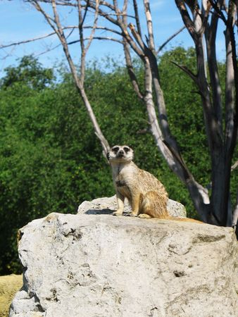burrow: Gopher guard on the stone before his burrow