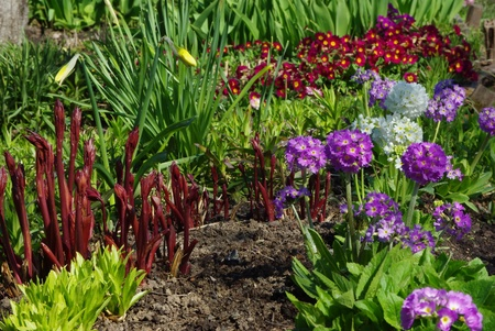 Colorful Blooming  Flower Bed in Early Springtime Stock Photo - 11780686