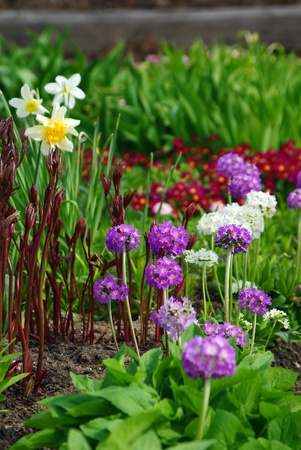 Colorful Blooming  Flower Bed in Early Springtime photo