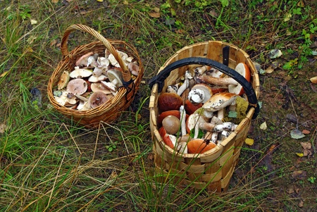 fungous: Two baskets full of different forest mushrooms Stock Photo