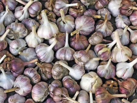 Close up view of garlic bulbs background photo