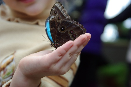 Beautiful colour butterfly on child finger  Insect Stock Photo - 13165187