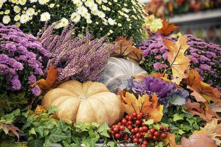 Herbstkomposition mit Kürbisspkin in verschiedenen Formen, Blumen und Pflanzen auf dem Manege-Platz in Moskau, Russland. Erntedankfest, Bauernmarkt. Herbstdekorationen. Hintergrund für Halloween. Standard-Bild