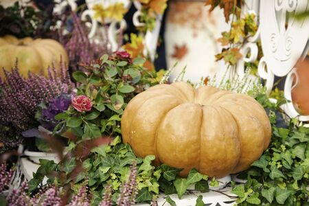 Autumn composition with pumpkinspkin in various shapes, flowers and plants on Manege square in Moscow, Russia. Harvest holiday, farm market. Autumn decorations. Background for halloween.