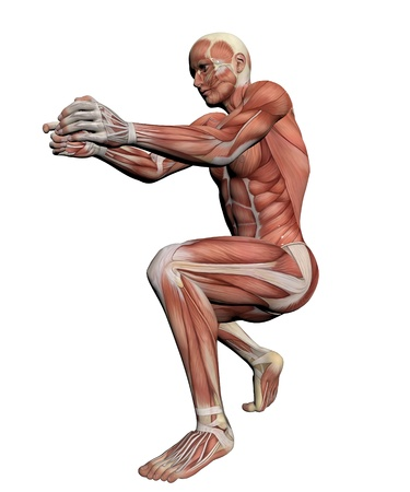 anatomy body: Human Anatomy - Female Muscles made in 3d software