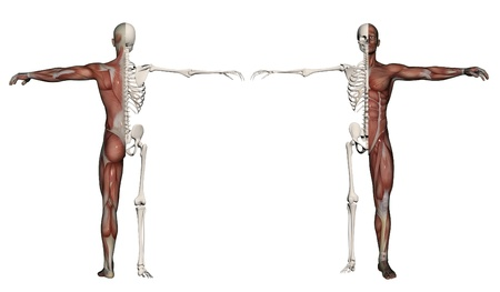 Human body of a man with muscles and skeleton made in 3d software