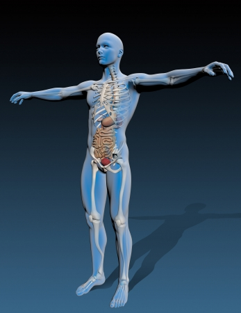 Human body with internal organs, composite by stomach,  Great to be used in medicine works and health Stock Photo - 19866711
