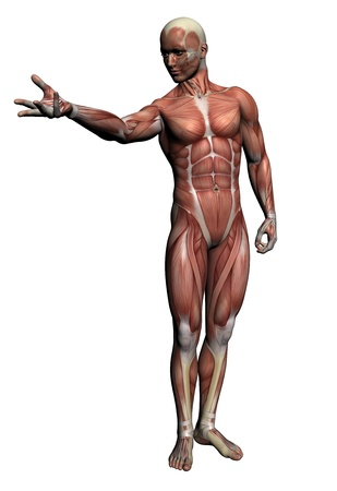 man rear view: Human Anatomy - Male Muscles made in 3d software Stock Photo