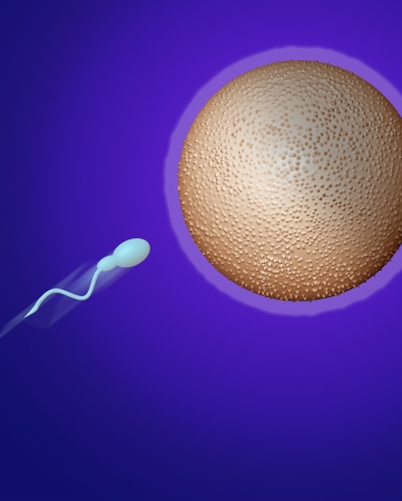 sperm heading towards egg made in 3d software