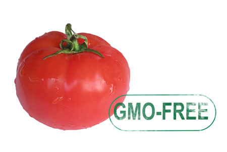 Tomato gmo-free stamp i solated on white photo