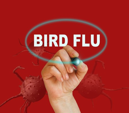 avian flu: writing word BIRD FLU with marker on red background made in 2d software