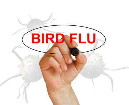 avian flu: writing word BIRD FLU with marker on white background made in 2d software