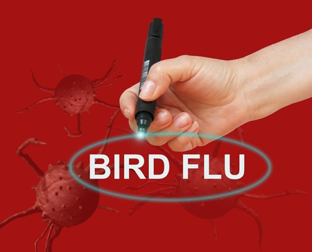 bird flu: writing word BIRD FLU with marker on red background made in 2d software