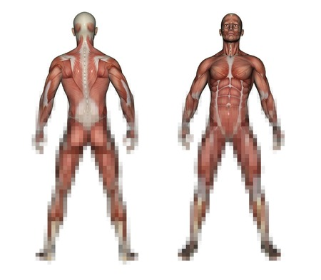 handcarves: Human Anatomy - Male Muscles made in 3d software Stock Photo