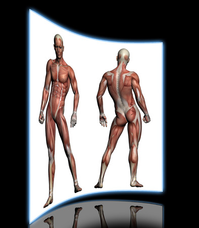 anatomically: Human Anatomy - Male Muscles made in 3d software Stock Photo