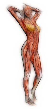 rear view: Human Anatomy - Female Muscles made in 3d software