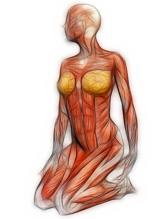 Human Anatomy Female Muscles Made In 3d Software Stock Photo
