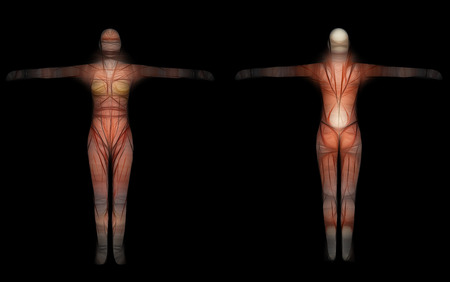 fem: Human Anatomy - Female Muscles made in 3d software