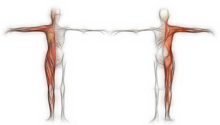 rear view: Human body of a female with muscles and skeleton made in 3d software