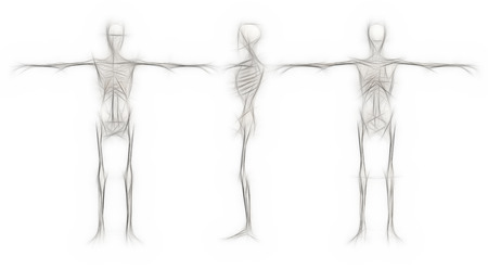 front end: Human Skeleton - male back, front,end right made in 3d software
