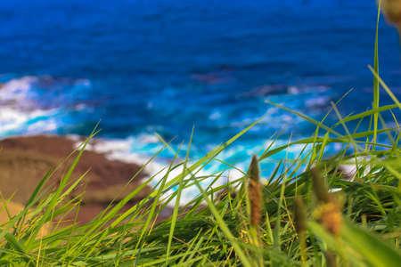 Green grass against a background of blue turbulent ocean in summer Standard-Bild