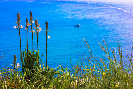 Green grass against a background of blue ocean in summer and a little boat on the horizont Standard-Bild