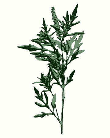 quarantine: Vector graphic, artistic, stylized image of ragweed