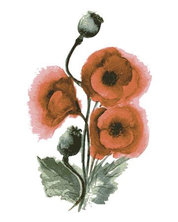 opium: Vector illustration of poppies watercolor