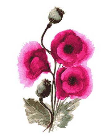 Vector illustration of poppies watercolor Vector