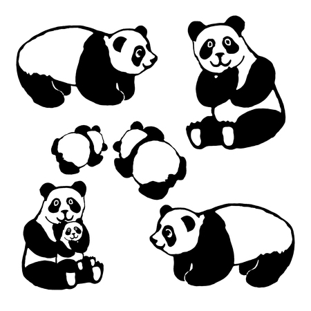 Vector image of a bear panda. Set. For the design of postcards, books, for coloring, printing on clothes. Illustration