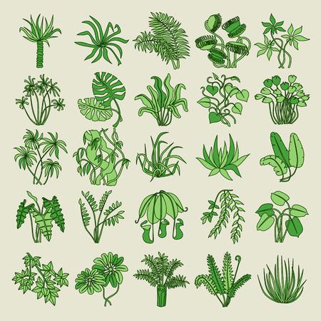 jungle plants: Jungle. Fresh green leaves.
