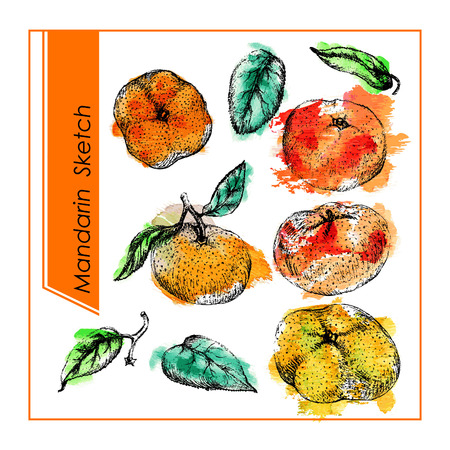 ink water: Sweet tangerines. Set of different mandarines and leaf. Pencil sketch  with orange and green watercolor spots on background. Illustration