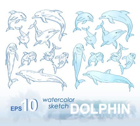 Zestaw szkiców i obrazów akwarelowych z delfinami. ilustracji wektorowych.